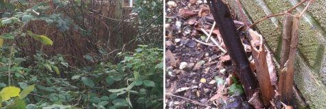 Japanese knotweed and property auctions