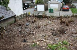 Garden completely destroyed by Japanese knotweed