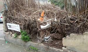 Japanese knotweed damage to boundary wall
