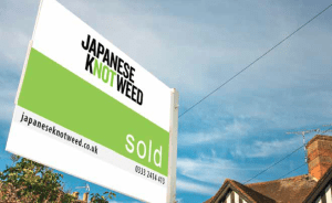 Selling house with Japanese knotweed